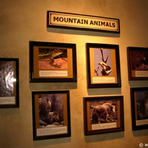 Expedition_Everest_Queue_74