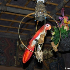 Adventureland_-_Enchanted_Tiki_Room_06