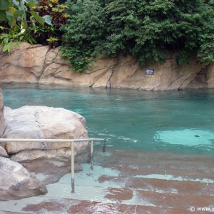 Discovery_Cove_Tropical_Pool_14