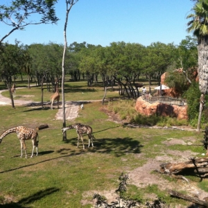 Animal-Kingdom-Lodge-Animals-010