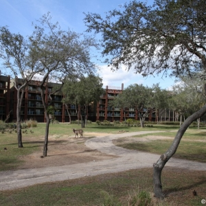 Animal-Kingdom-Lodge-Animals-033