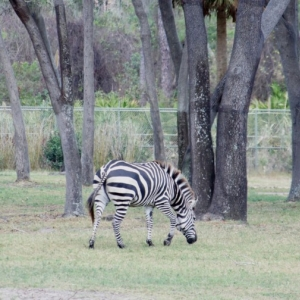 Animal-Kingdom-Lodge-Animals-039