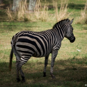 Animal-Kingdom-Lodge-Animals-041